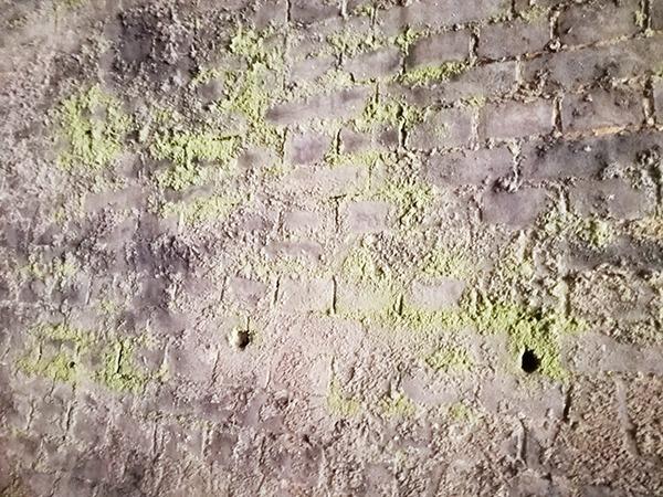 アプトの道 第十号トンネルレンガの苔