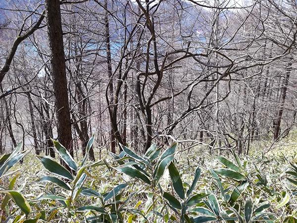 榛名富士登山道からの風景