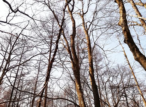 榛名富士からゆうすげ元湯に行く道にある木