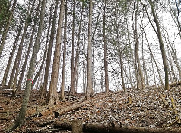 掃部ヶ岳登山道の様子