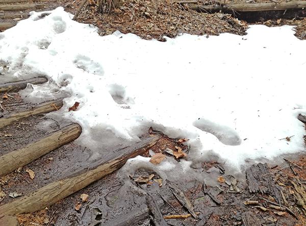 掃部ヶ岳登山道の階段の雪