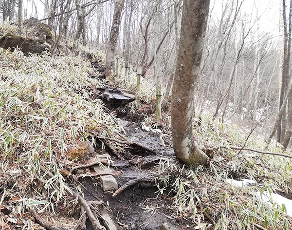 掃部ヶ岳山頂へ向かう道