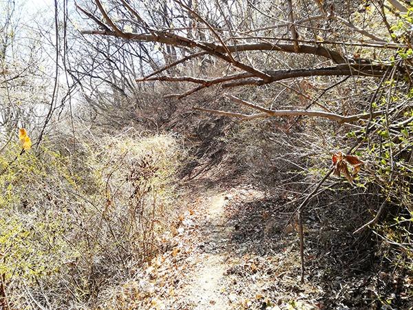 自然遊歩道「Cコース」