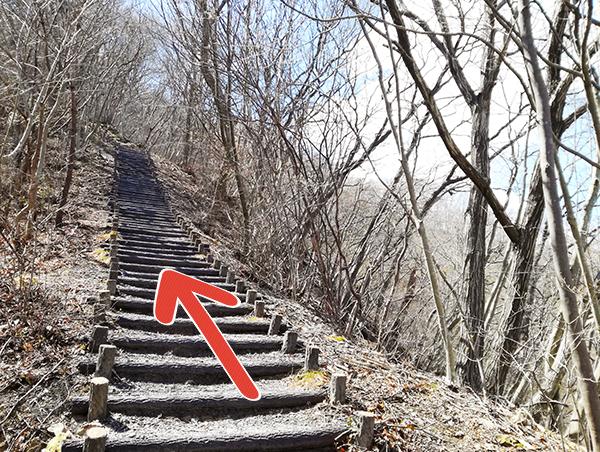 自然遊歩道「Aコース」の階段
