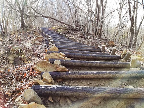 自然遊歩道「Aコース」の急な階段