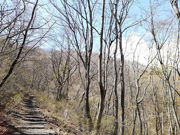 Dコースの自然遊歩道
