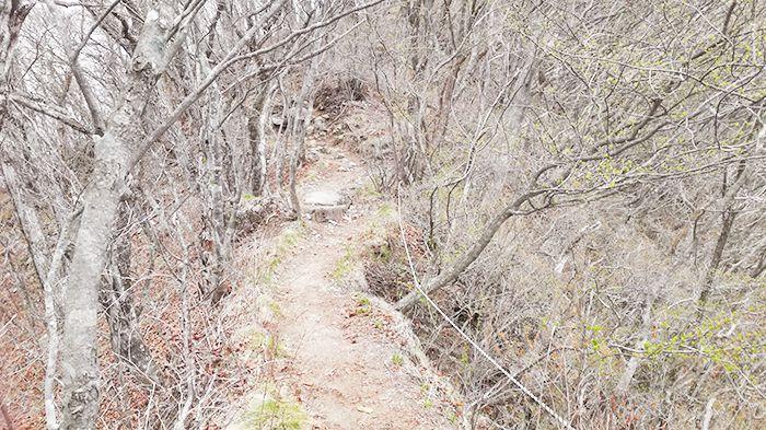 相馬山に向かう尾根の道