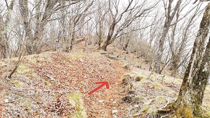 相馬山に向かう落ち葉の道