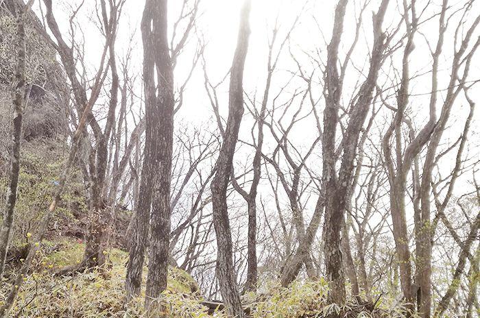 スルス岩へ登る道で見える風景