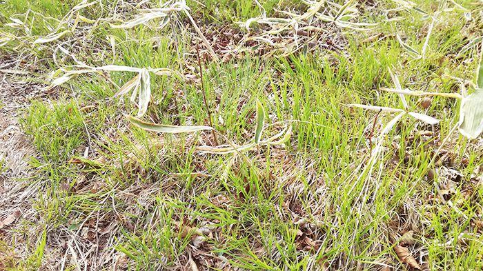 スルス岩から松之沢峠方面で下山する道にある芝