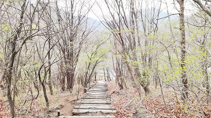 スルス岩から松之沢峠方面で下山する道にある階段