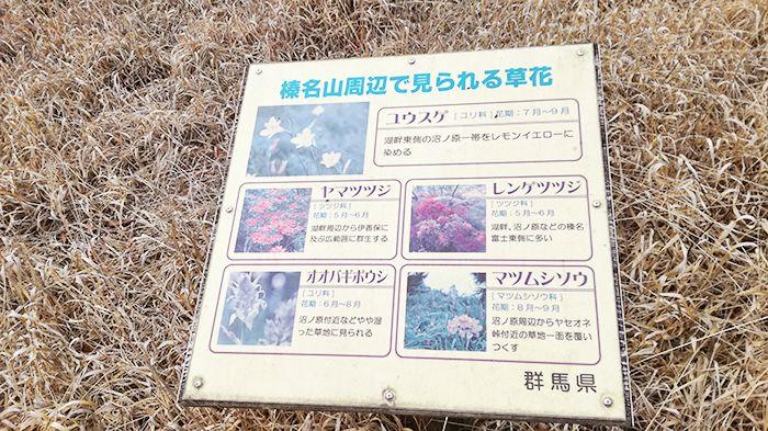 松之沢峠方面からゆうすげの道へ向かう道にある花情報の看板