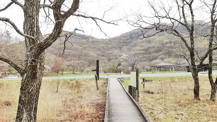 榛名湖のゆうすげの道