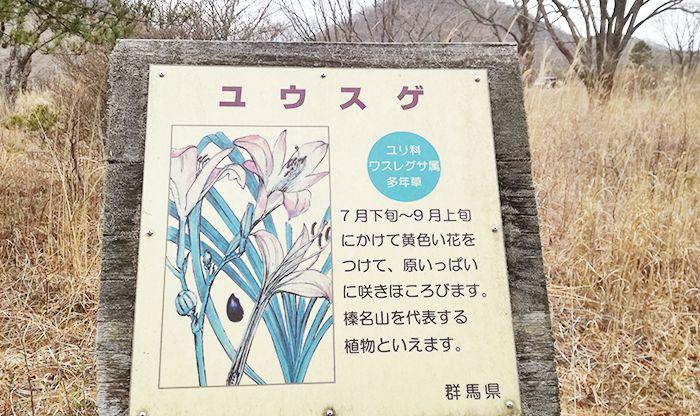 榛名湖のゆうすげの道にある花情報の看板