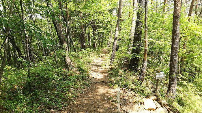 高王山の登山道