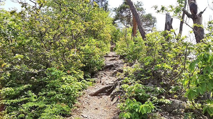 高王山山頂から下山する道