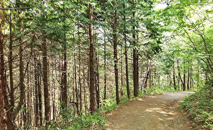 戸神山林道ルートの道