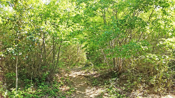 戸神山登山道にある神社裏の道
