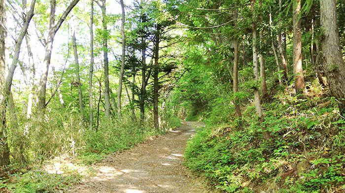 戸神山登山道
