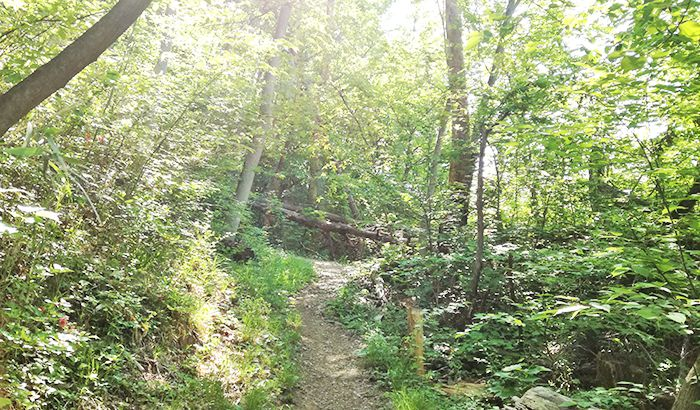 戸神山登山道の鉱山跡ルート