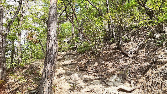 戸神山登山道から山頂へ
