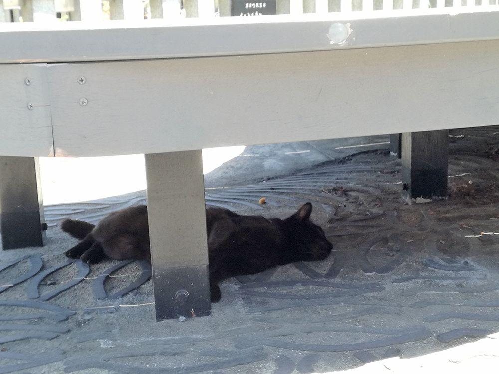 湯畑にいたネコ