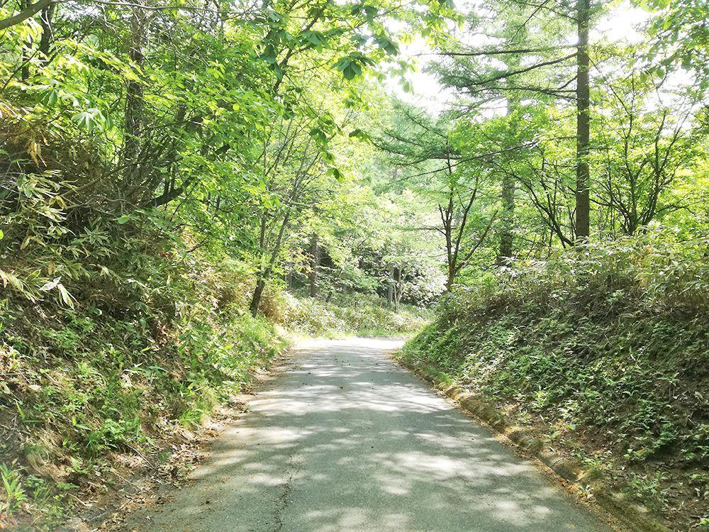 嫗仙の滝へ行く道