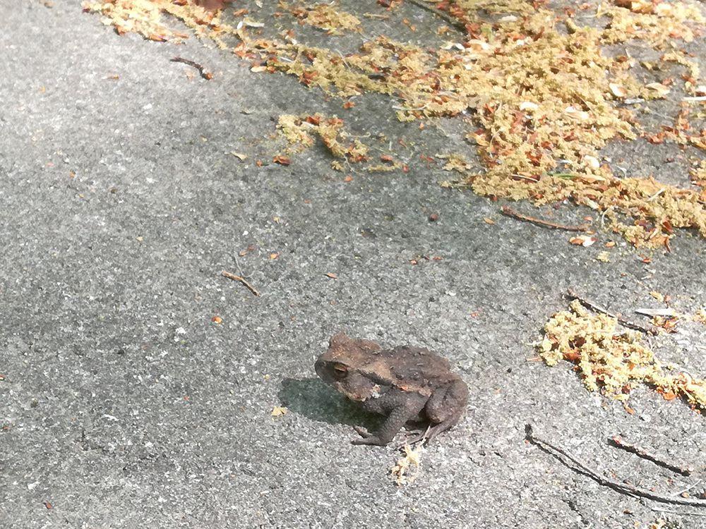 嫗仙の滝へ行く道で見つけたカエル