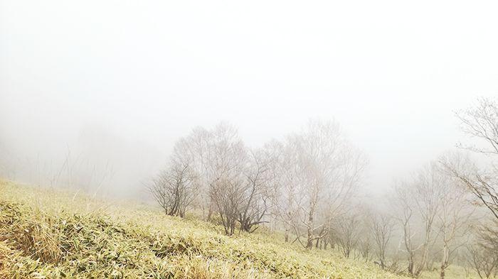 駒ヶ岳登山道の霧の様子