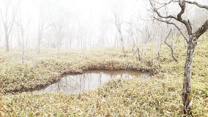 駒ヶ岳登山道にある池