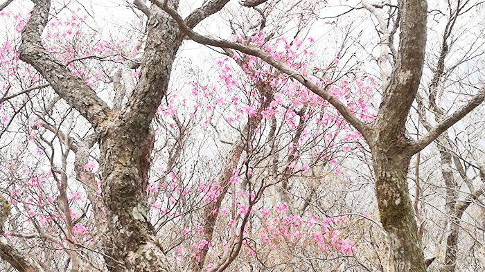 駒ヶ岳登山道にある花