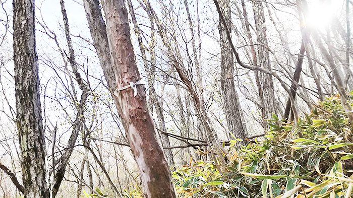 黒檜山登山道の目印