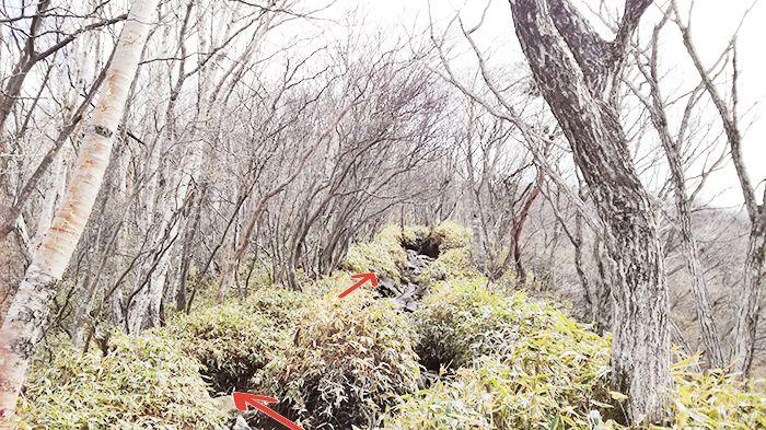 黒檜山登山道