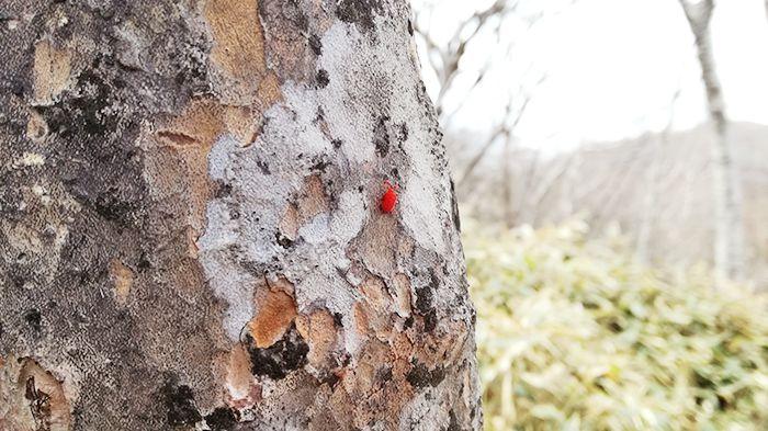黒檜山登山道にいる虫