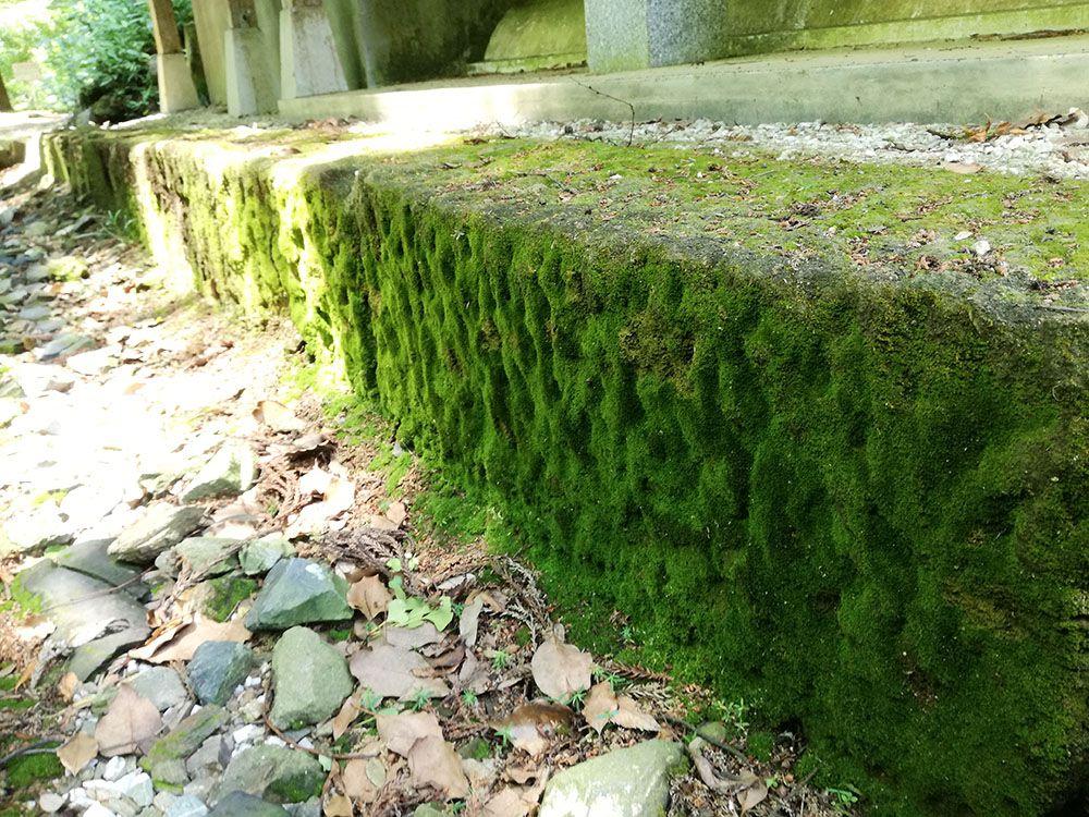 金鑚神社から駐車場への道にある苔