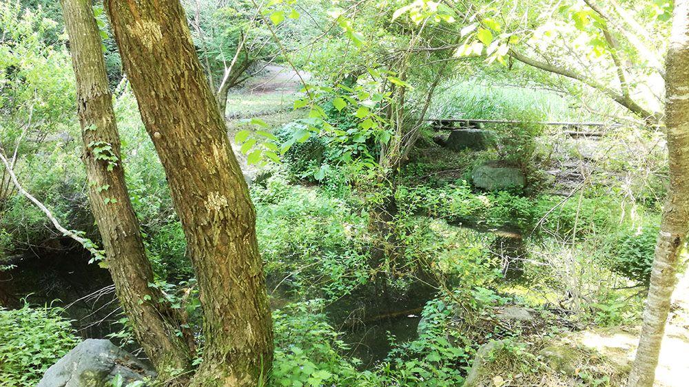 御嶽山ハイキングコースの道の蓮池