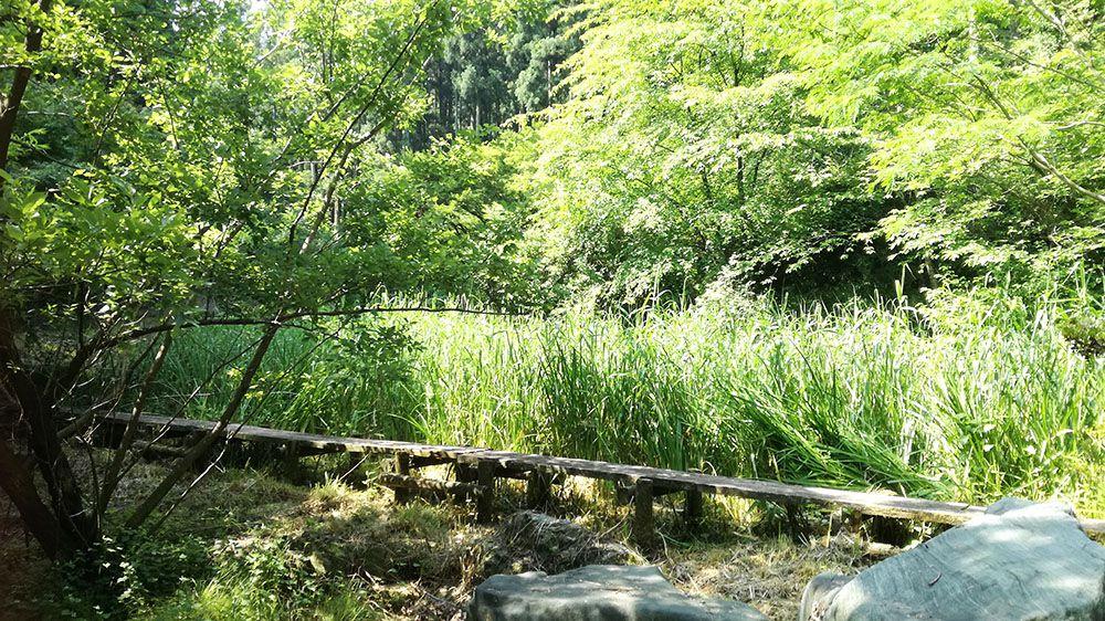 御嶽山ハイキングコースの道にある蓮池