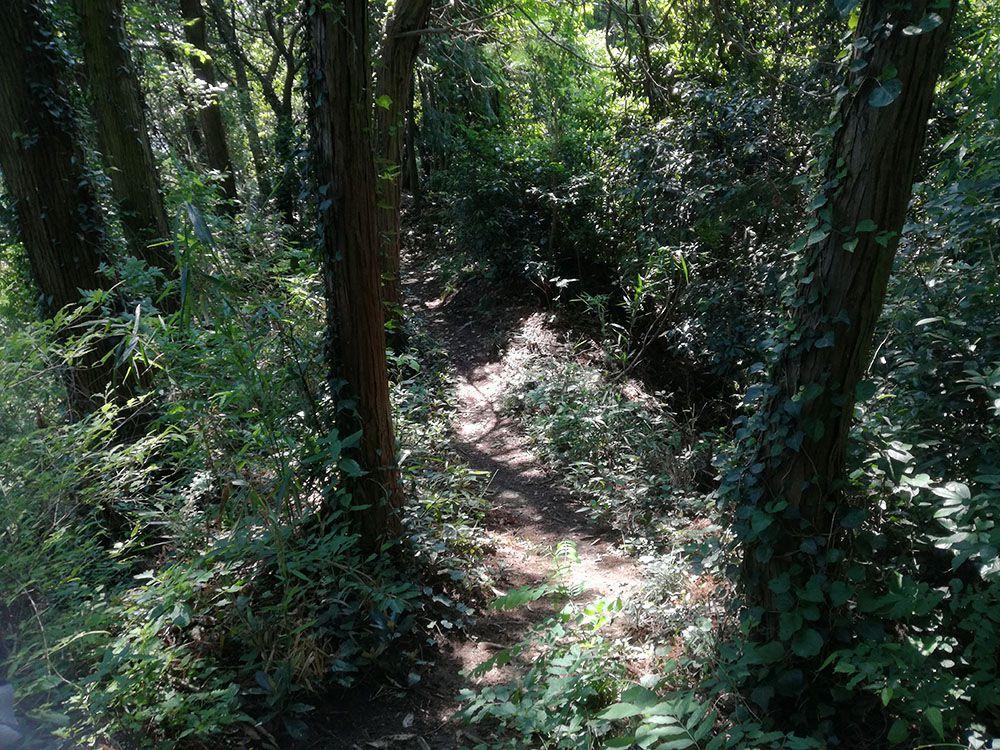 御嶽山山頂から展望台への道