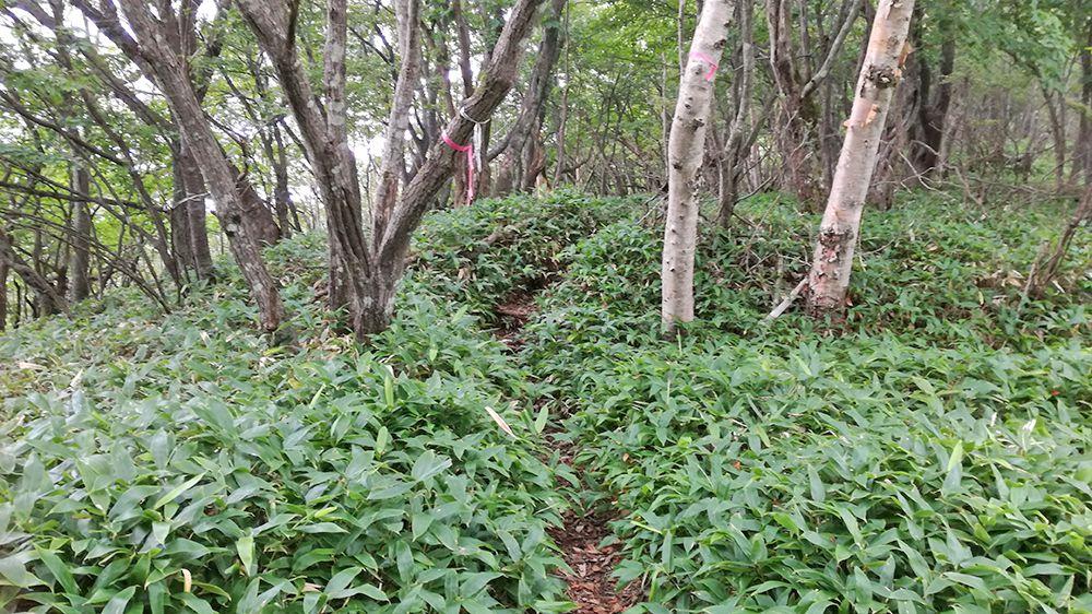 小地蔵岳登山道