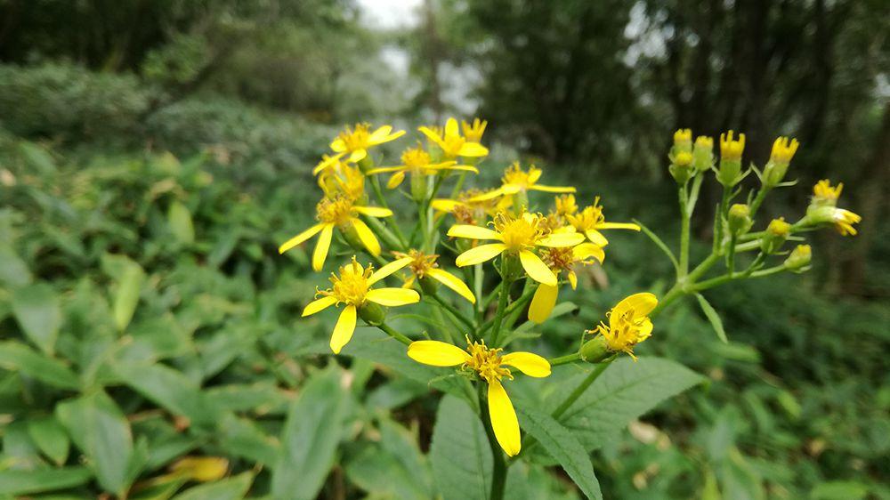 小地蔵岳登山道にある花