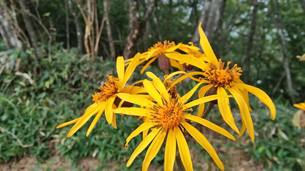 長七郎山登山道にある花