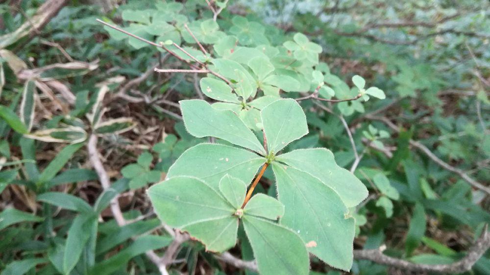 長七郎山から小沼までの道にある植物