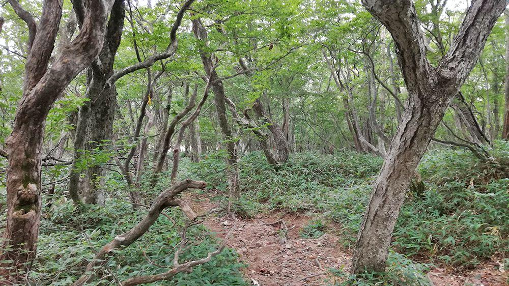 長七郎山から小沼までの道
