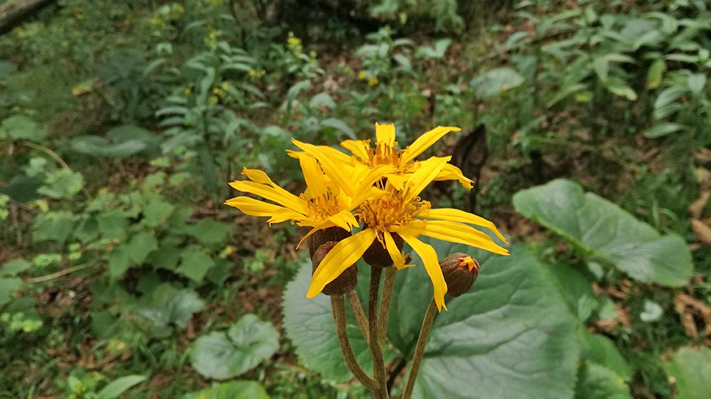 長七郎山から小沼までの道にある花