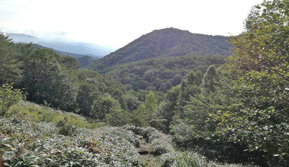 地蔵岳の遊歩道からの景色