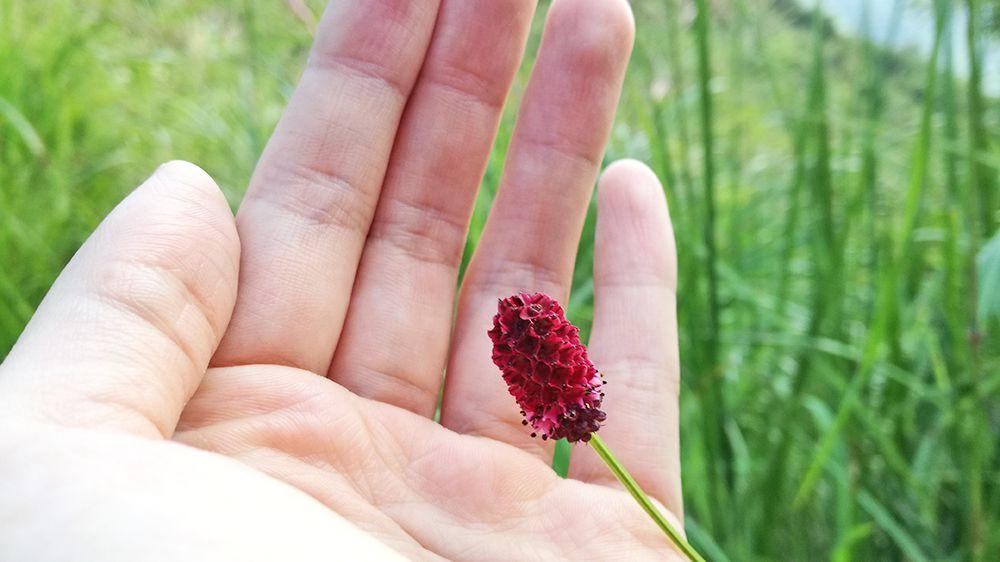 地蔵岳の遊歩道にある花