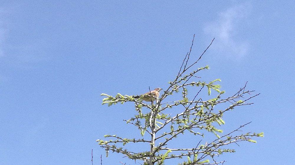 美ヶ原高原の遊歩道にいた鳥