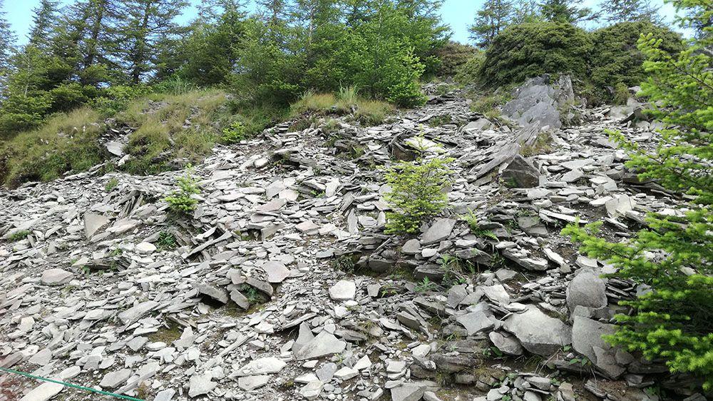 美ヶ原高原の遊歩道にある石