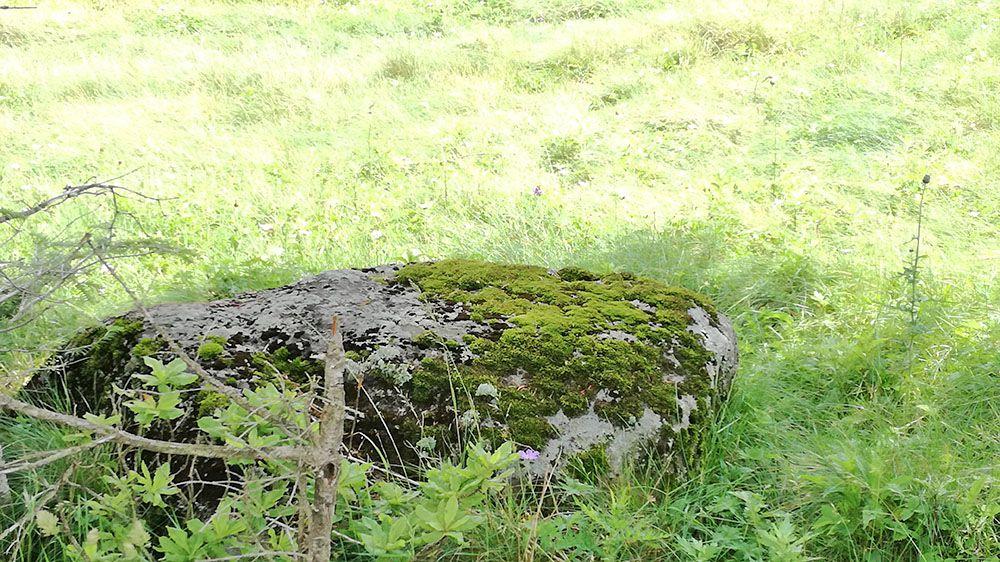 美ヶ原高原の風景と苔石