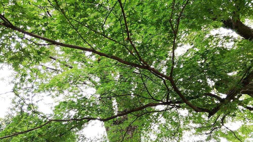 金山城跡の万葉歌碑周辺の木